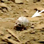 На Марсе обнаружен очередной череп